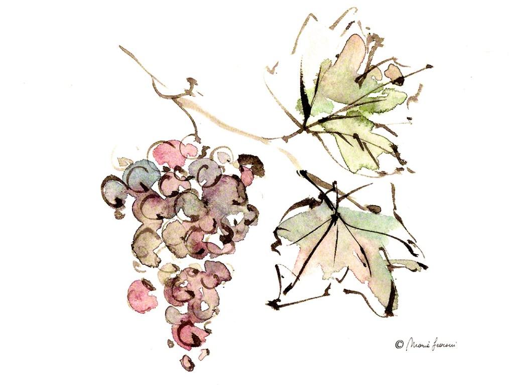 Acquerello e inchiostro cinese - grappolo d'uva