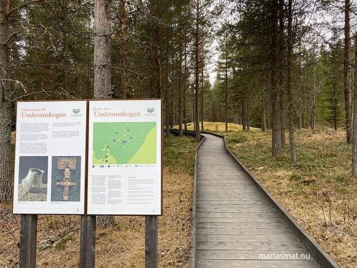 Undromsskogen