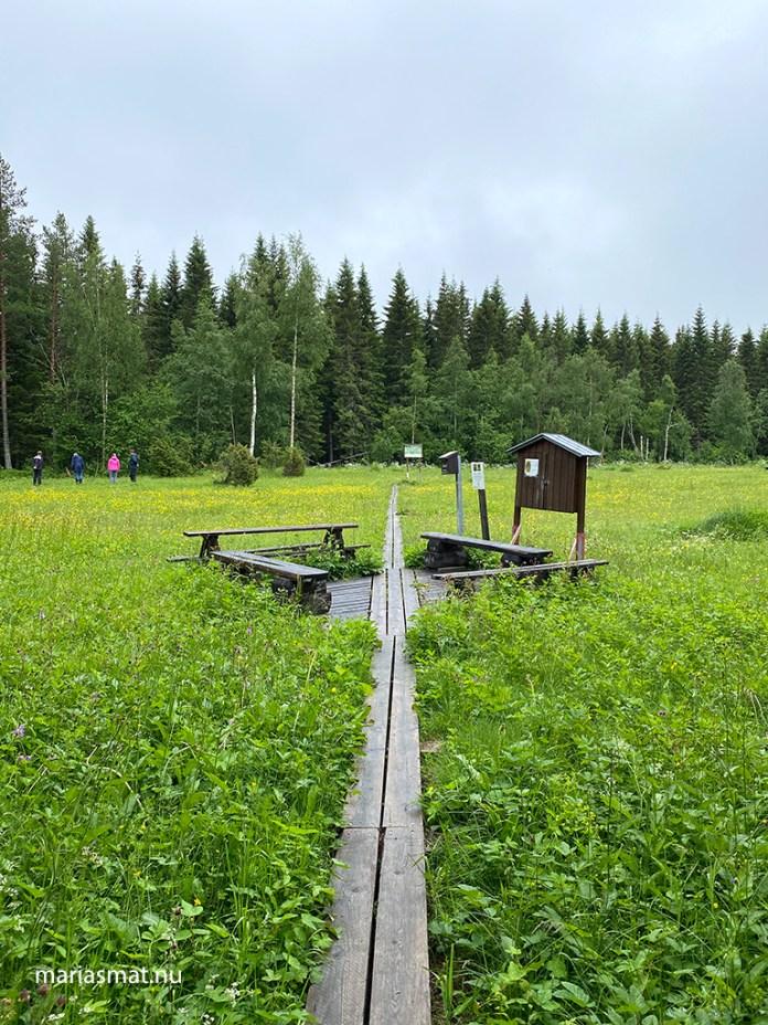 Brunkulla - Jämtlands landskapsblomma