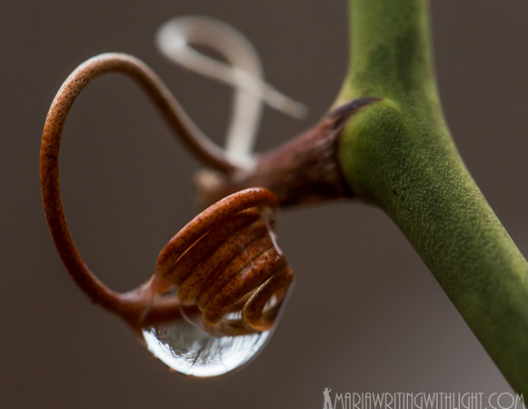martha's vineyard photography, water drop macro