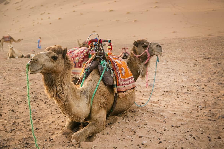 Desierto de Zagora, Marruecos