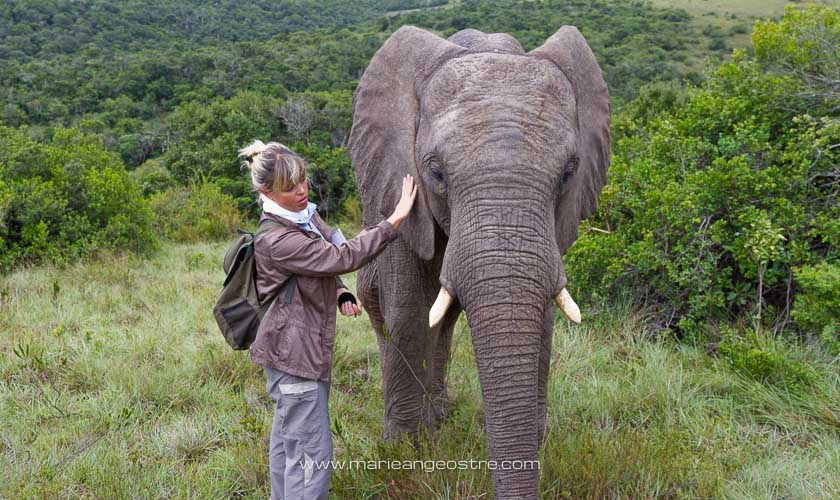 Afrique du Sud, Marie-Ange Ostré et éléphant d'Afrique © Marie-Ange Ostré