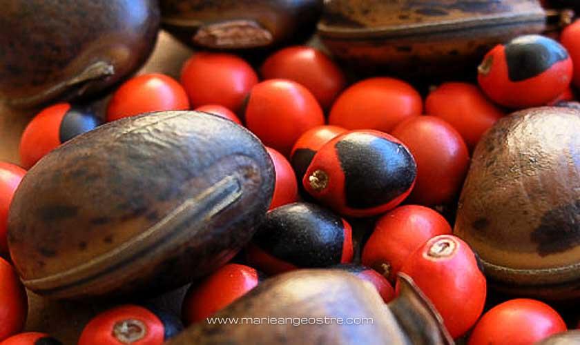 Cadeau de Guyane, graines de panacoco © Marie-Ange Ostré