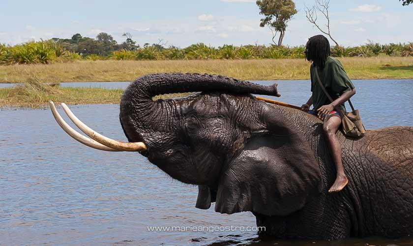 Botswana, éléphants dans l'eau dans le delta de l'Okavango © Marie-Ange Ostré