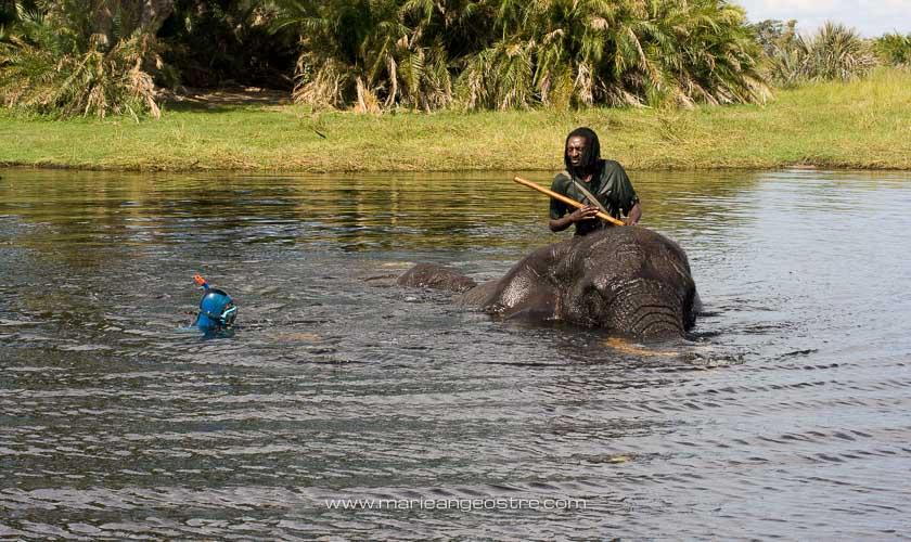 Botswana, éléphant dans l'eau de l'Okavango © Marie-Ange Ostré