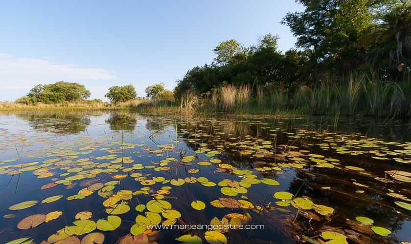 Botswana, navigation sur le delta de l'Okavango © Marie-Ange Ostré