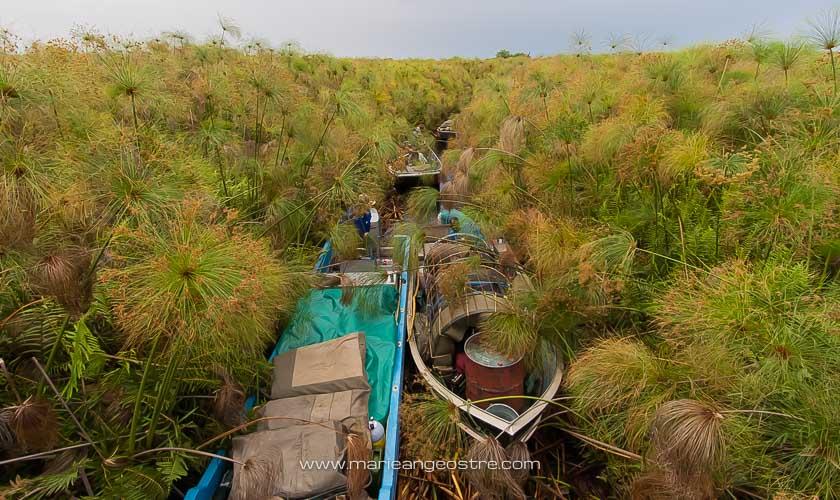 Botswana, navigation dans les papyrus du delta de l'Okavango © Marie-Ange Ostré