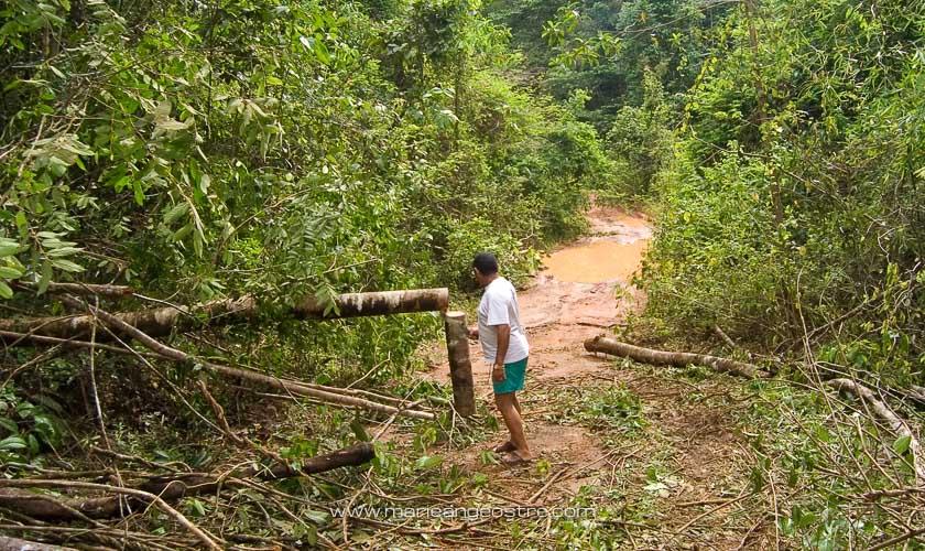 Amazonie, en forêt guyanaise entre Guyane et Brésil © Marie-Ange Ostré