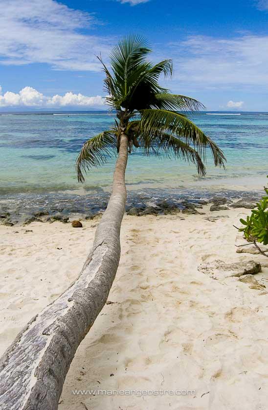 Le palmier qui figure sur de nombreuses photos de mode, La Digue, Seychelles © Marie-Ange Ostré