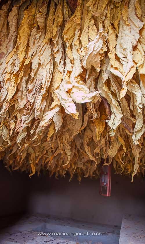 Chine, séchoir à feuilles de tabac, Yunnan © Marie-Ange Ostré
