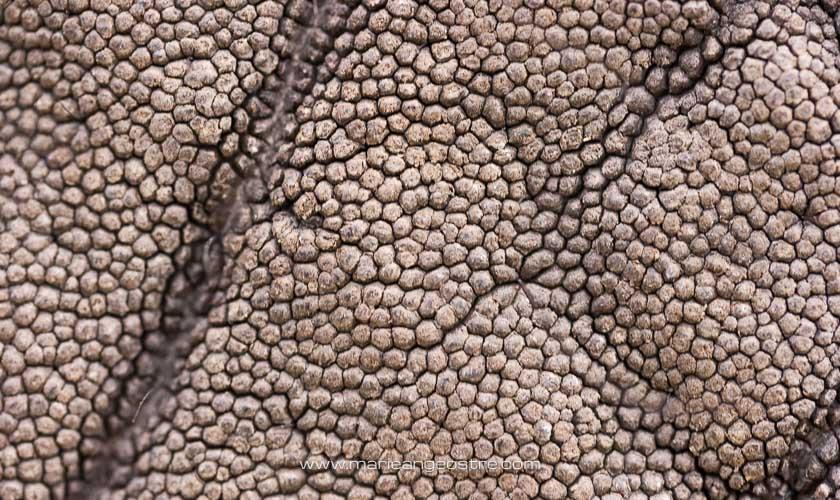 Botswana, gros plan sur la peau d'un éléphant dans l'Okavango © Marie-Ange Ostré
