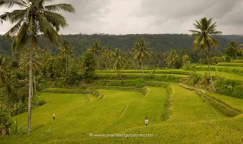 Rizières de Bali ©Marie-Ange Ostré