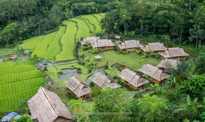 Bali, rizières à Ubud © Marie-Ange Ostré