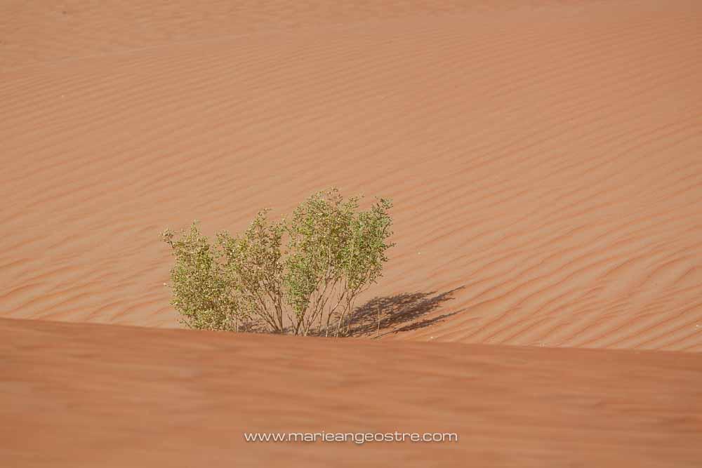 Abu Dhabi desert © Marie-Ange Ostré