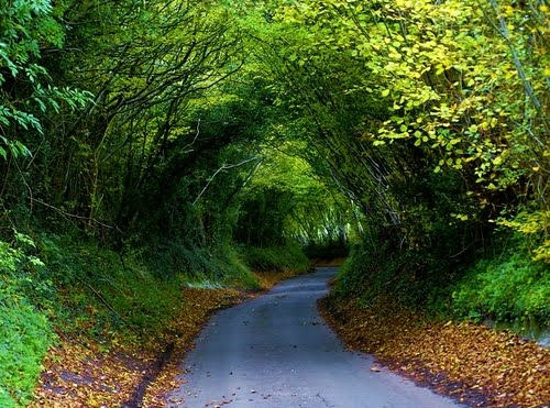 Hobbit Highway, Chiltern, England