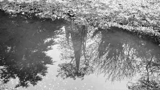 Norwich Cathedral in a puddle, taken by Norfolk playwright Marie Cooper