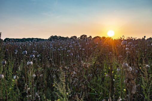 boerderij de nieuwe baankreis werkt naar een CO2 neutrale bedrijfsvoering