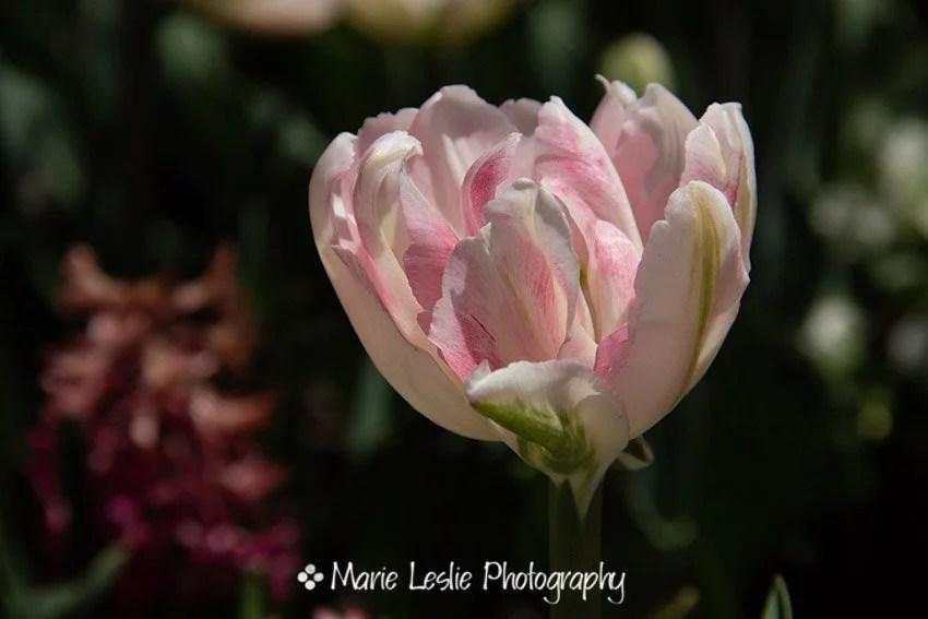 Pale Pink Abundance