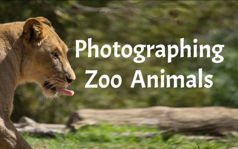 Photographing Zoo Animals