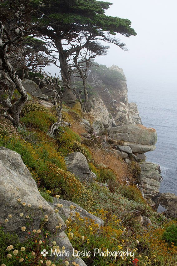Cypress Cliff. Monterey Pines at Point Lobos