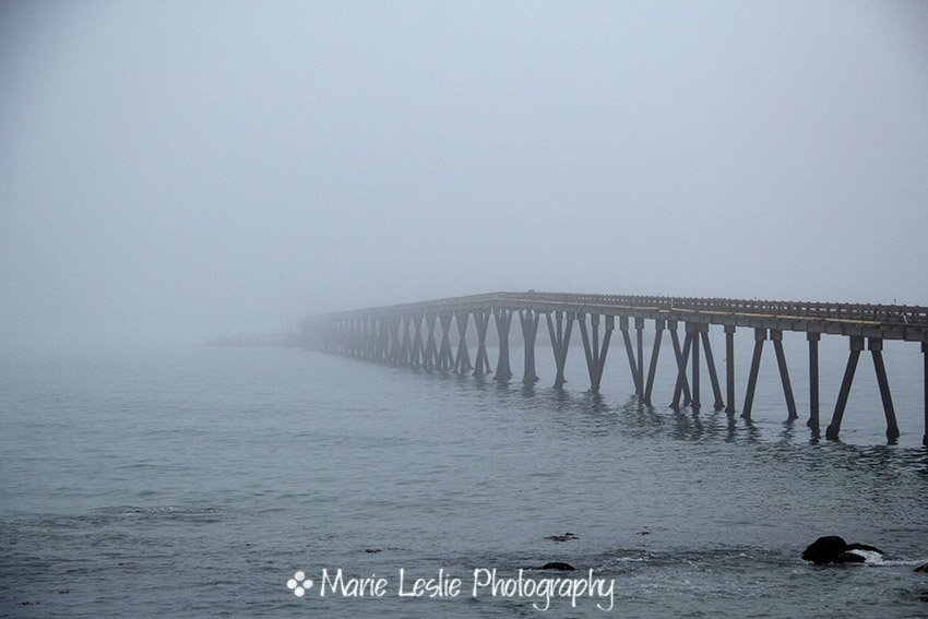 Into the Fog--Ventura Pier on a foggy summer evening