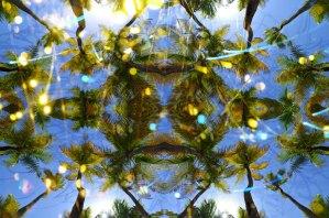 "Palmas energy, 2013, C-print, 20"" x 30"""
