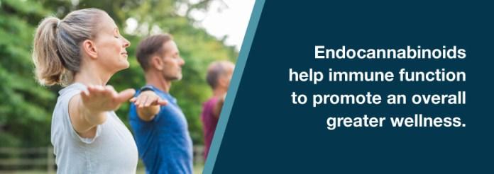 endocannabinoid wellness
