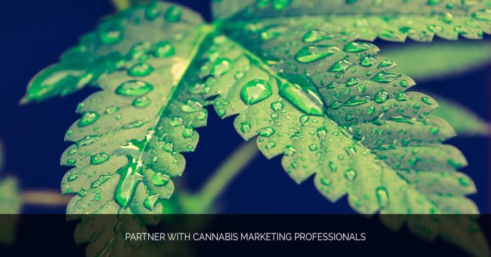 Partner with Cannabis Marketing Professionals