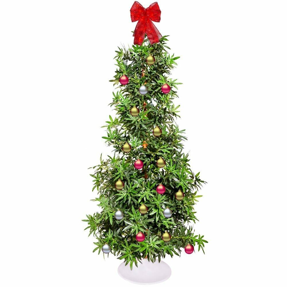20 Holiday Themed Cannabis Christmas Gifts Marijuana Mommy