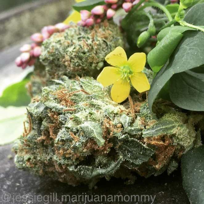 cannabis is not deadly but here's what is