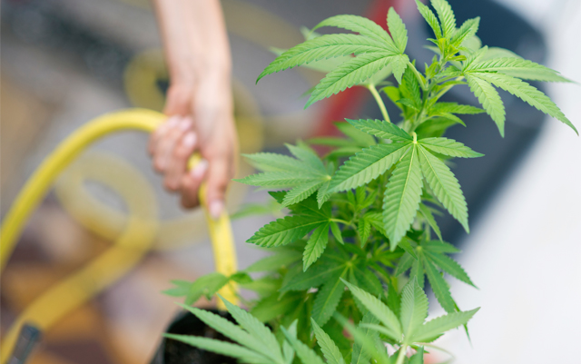 cannabis-expected-to-create-more-jobs-than-the-manufacturing-industry-by-2020