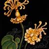かるた・あえりあ<ヴォイニッチ植物園-Ⅱ> CHARTA AERIA<Voynich Garden – II>