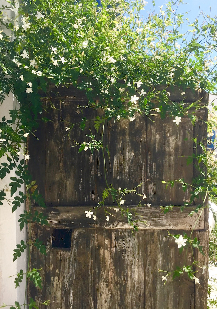 Doors of the Greek Islands - door with jasmine