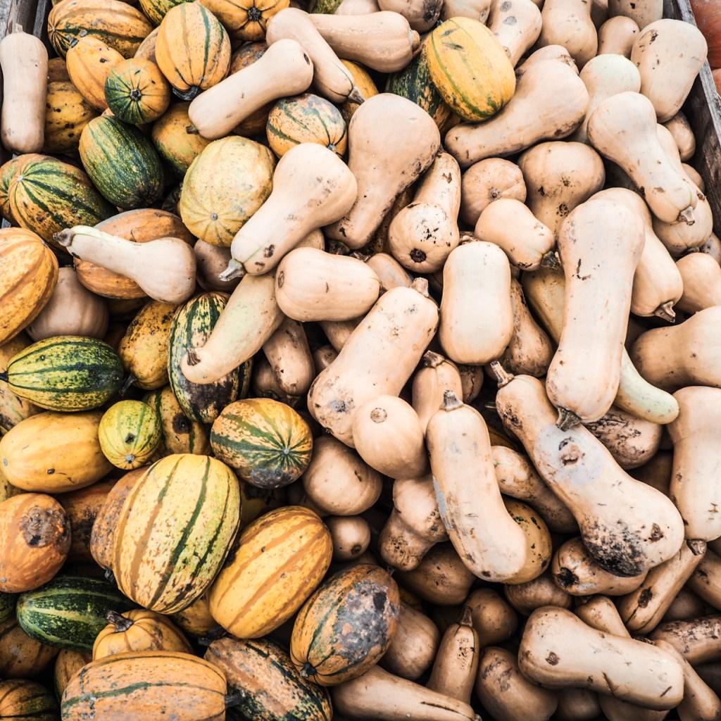 Kürbisse für die cremige Kürbissuppe. Herbstlich, sämig und einfach lecker: Kürbissuppe mit Muskatkürbis, Kokosmilch und Agavensirup