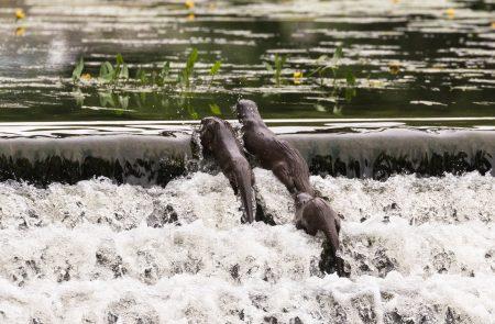 Otters-weir