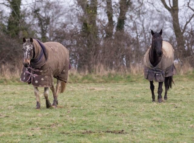 Horses in winter coats!