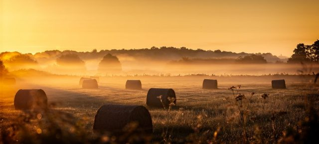 Dawn near Catcott