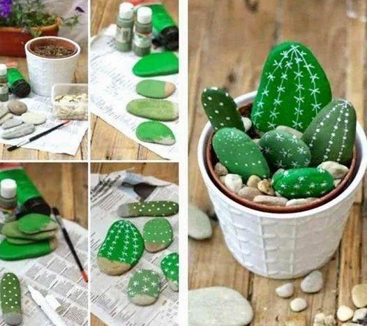 cactus con piedras
