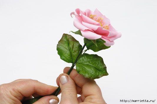 rosa-porcelana-fria