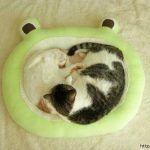Diy Como hacer una cama para mascotas