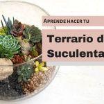 DIY para hacer un terrario con suculentas