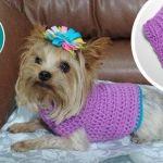 Cómo tejer un Jersey a crochet para mascotas