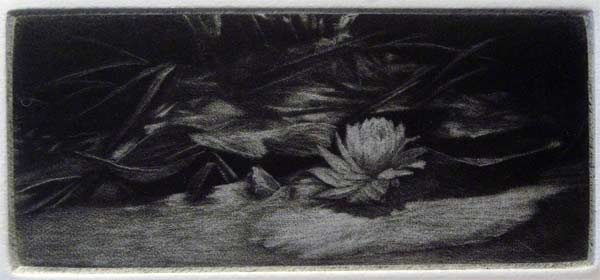 """""""Pond"""" - black and white picture of a pond with water lily. Original print mezzotint by painter-printmaker Marina Kim"""