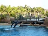 Afrique du Sud - Durban - Parc caquatique