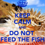 keep-calm-and-do-not-feed-the-fish