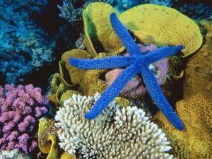 BlueStar Coral Reef Tourism