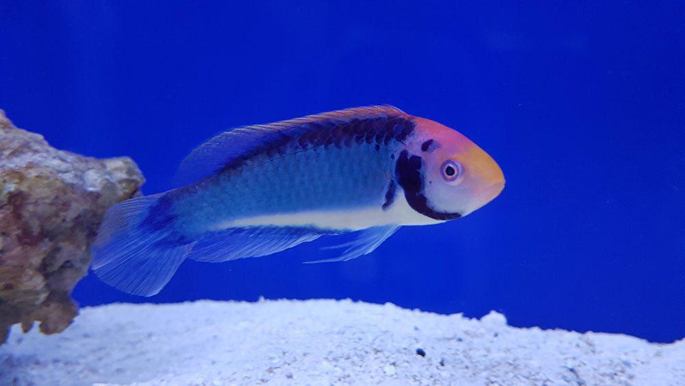 marine fish online