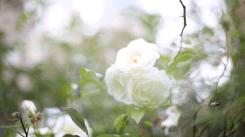 mademoiselledeguise-wedding-elopement-photographer-marineleberre-video-4