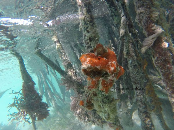 both-upside-down-jellyfish-10