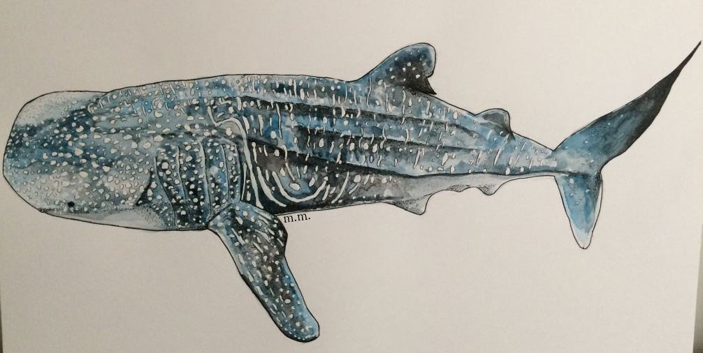 Whale Shark – Painting Tutorial